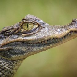 Wrestling With Spiritual Alligators